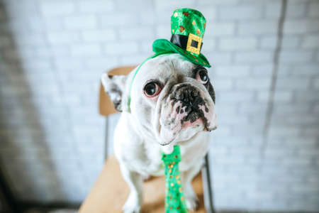 Dog in disguise for St. Patricks Day