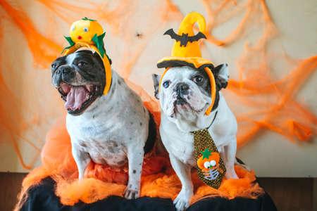 couple de chiens avec costume d'halloween