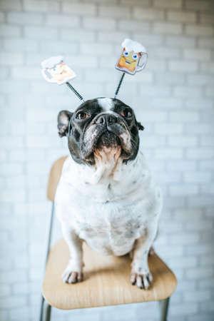 Perro con diadema de cerveza