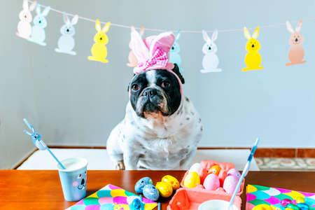 Dog celebrating Easter