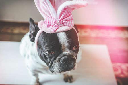 Portrait of dog with rabbit hat