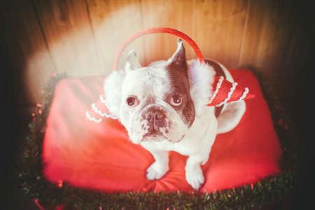 Hund angezogen für Weihnachten