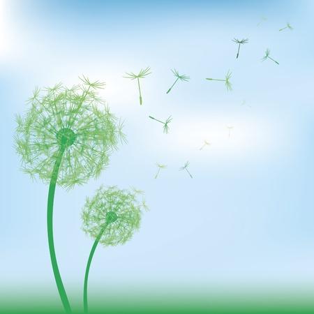 dandelion abstract: Dandelions