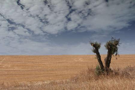 field landscape Stock Photo - 475247