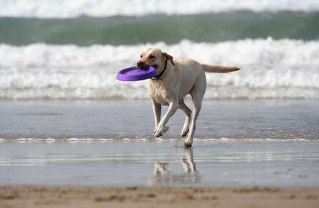 dog with disc in the mouth
