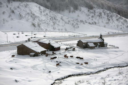 small farm with snow in picos da europa photo
