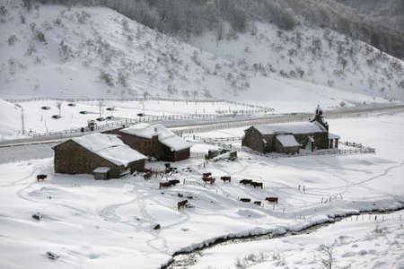small farm with snow in picos da europa Stock Photo - 680475