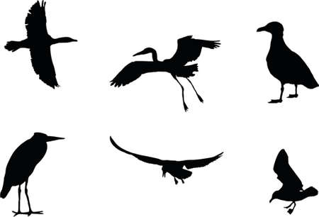 illustration of a silhouette of six birds Vector