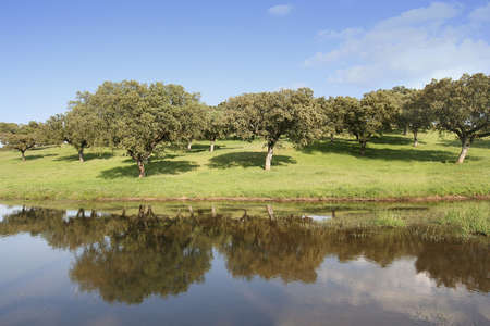 landscape with trees reflected in the water Stock Photo - 931585