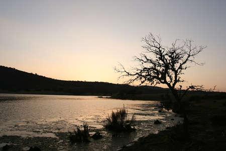 paesaggio con un albero al tramonto Archivio Fotografico - 931587