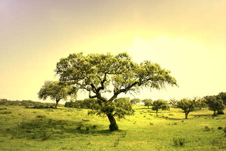 field landscape with trees at sunset Stock Photo - 949732
