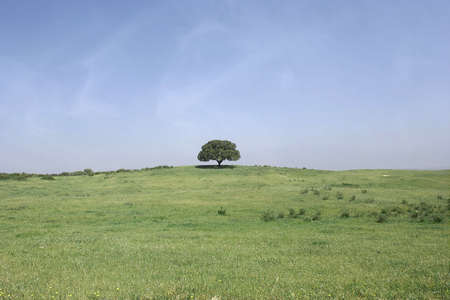 field landscape with a lonely tree and blue sky Stock Photo - 961276