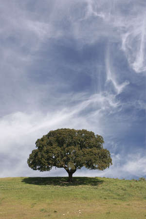 field landscape with a lonely tree and cloudy sky - portrait Stock Photo - 967483