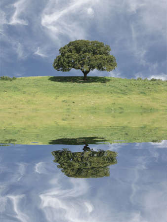 field landscape with a lonely tree and cloudy sky with reflex Stock Photo - 974112