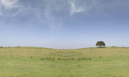 field landscape with a lonely tree on the right and clouds on the sky Stock Photo - 1005236