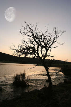 understated: tree at sunset with the moon in the sky Stock Photo