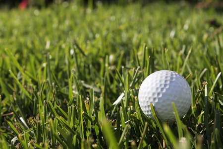 golf ball in the grass Stock Photo - 2391372