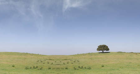 field landscape with a lonely tree on the right and clouds on the sky Stock Photo - 5816662