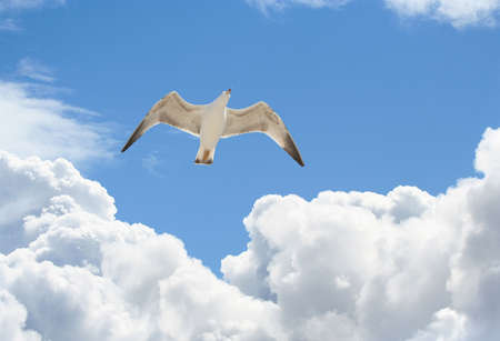 seagull flying in a blue sky with beautifull clouds Standard-Bild