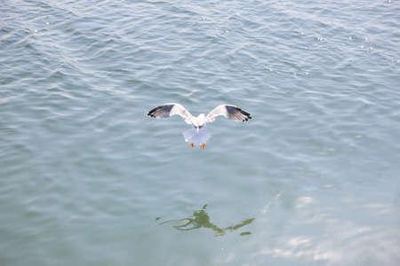 seagull flying over the water Standard-Bild