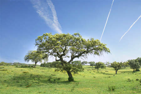 field landscape with trees and a blue sky