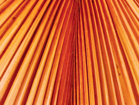 Dry palm leaf in orange colors for decoration