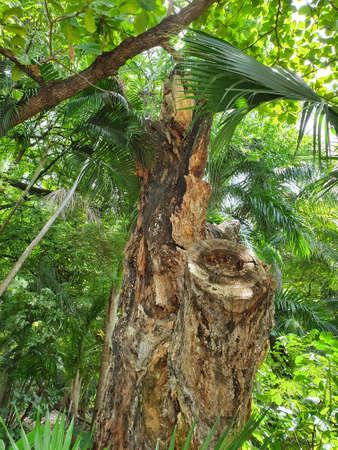 old tree trunk cut in tropical vegetation zone Stockfoto