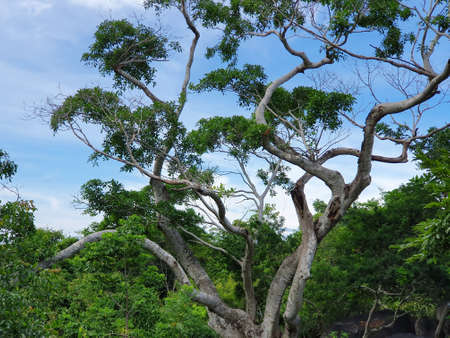 tropical weather tree with green foliage in summer season Stockfoto