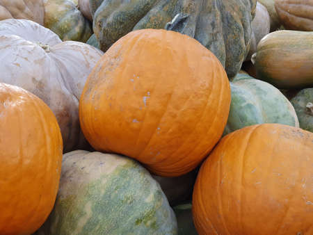 Heap of pumpkin fruit in a market, background and texture Stockfoto