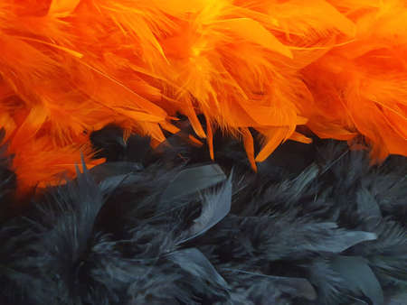 approach to lot of feathers in orange and black colors, background and texture