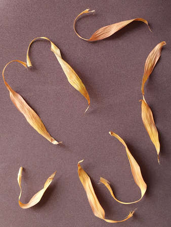 dried leaves of plant on brown background