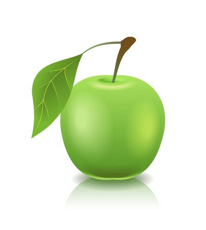 Green ripe apple is in the image. Vector