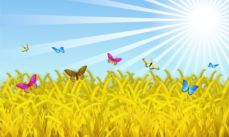 Wheat on the sky background is shown in the picture  Vector