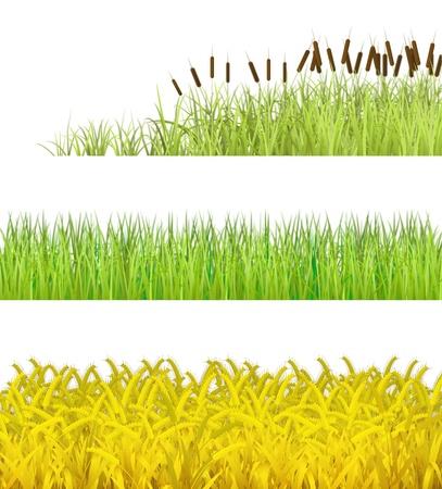 pantanos: Plantas aisladas sobre fondo blanco, se muestra en la imagen Foto de archivo