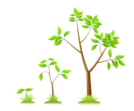 Plants on a white background are shown in the image. Stock Vector - 14205038