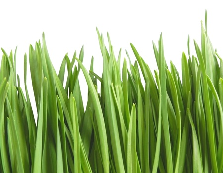 Green grass on the white background