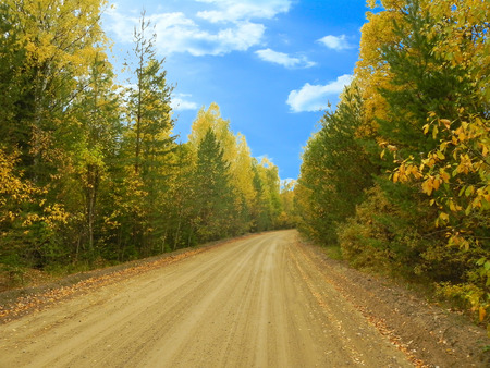 Forest road and autumn forest.