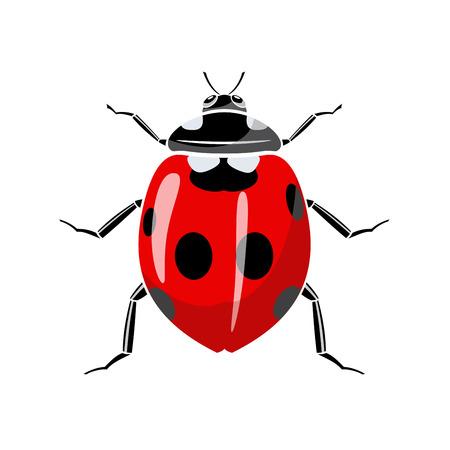 Symbol of a ladybug is on a white background. Vektorové ilustrace