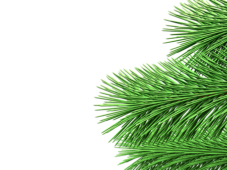 Fir branches with green needles are shown on white background Stock Photo
