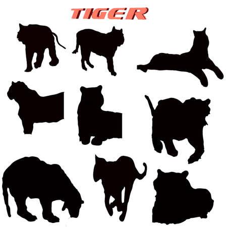 Poses Tiger