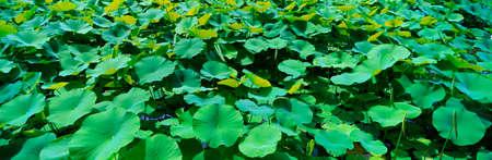 ful: Plants,Italy