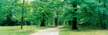ful: Forest in Potsdam,Germany LANG_EVOIMAGES