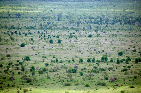 kruger national park: High angle view of a green plain,Kruger National Park,Mpumalanga,South Africa