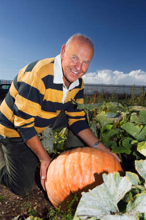 large pumpkin: Senior man kneeling beside large pumpkin in vegetable garden, smiling, side view, portrait