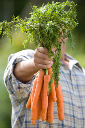 obscuring: Senior man with carrots obscuring face