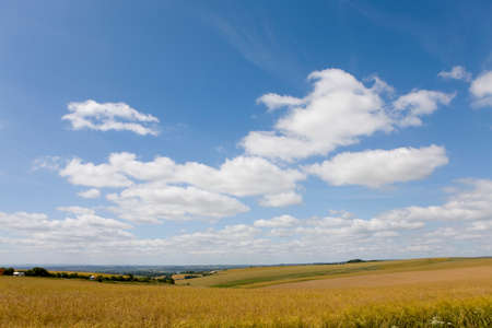 vastness: Clouds in blue sky over oat fields