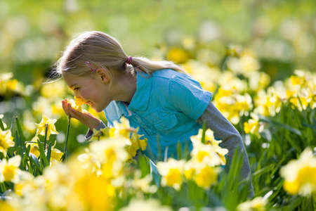 smelling: Young girl smelling daffodils LANG_EVOIMAGES