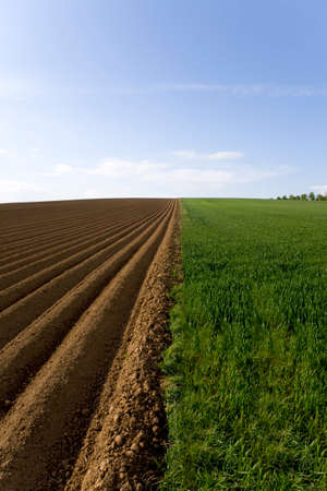 the ploughed field: Ploughed field next to young wheat field