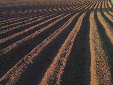 ploughed field: Ploughed field