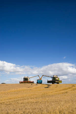 combines: Combines harvesting wheat and filling trailer in sunny rural field LANG_EVOIMAGES